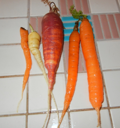 onion dip carrots